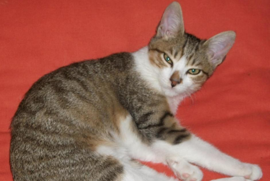 Disappearance alert Cat  Female , 8 years Italy Italy